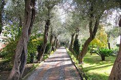 Villa Comunale. Taormina.  Comunal Garden in Taormina. #Sicily