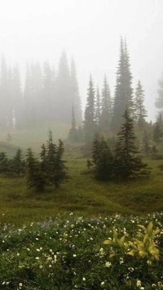 Forest Fairy, Snow Forest, Misty Forest, Nature Aesthetic, Autumn Aesthetic, Far Away, Pretty Pictures, Aesthetic Pictures, The Great Outdoors
