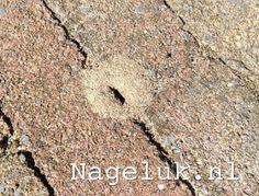 Wat te doen tegen mieren die je terras ondergraven