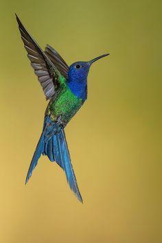 Comunidad argentina de fotógrafos de naturaleza
