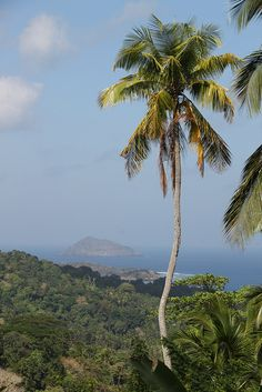 Palm Tree and fantastic vistas - Comoros, Africa