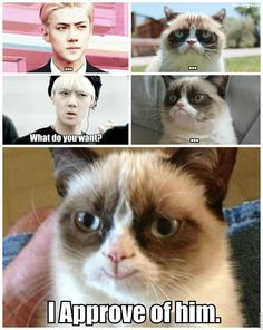 Sehun_Grumpy Cat_MACRO by dancingdots.deviantart.com on @deviantART...Hilarious