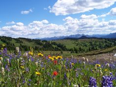 Sub alpine meadow, Manning Park