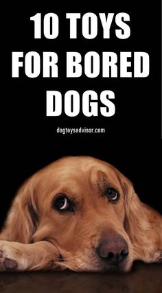 10 Best Dog Toys For Bored Dogs It is not at all uncommon for our dogs to get bored, especially if they're home alone. These Are The 10 Best Toys That Actually Help Bored Dogs. Cute Dog Toys, Diy Dog Toys, Best Dog Toys, Cool Toys, Best Dogs, Toys For Bored Dogs, Dog Boredom, Dog Games, Best Dog Training