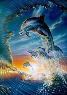 . dolphins