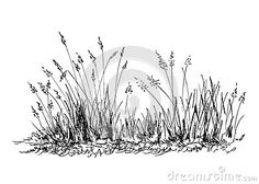 Illustration about Hand sketch grass. Illustration of abstract, field, outline - 56432723 Tree Drawings Pencil, Ink Pen Drawings, Realistic Drawings, Grass Drawing, Plant Drawing, Barn Drawing, Landscape Tattoo, Landscape Drawings, Tree Sketches