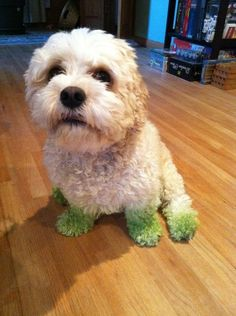 """""""Made sure you didn't miss any patches when you mowed the grass."""" 