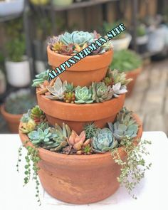 Succulents vs Cacti— What's the Difference? – Container Gardening Succulents vs Cacti— What's the Difference?- Succulents vs Cacti— What's the Difference? Crassula Succulent, Succulent Gardening, Garden Terrarium, Container Gardening, Succulent Planters, Cacti Garden, Succulent Garden Ideas, Terrarium Ideas, Succulent Containers