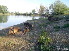 DXN businessman Gergely Takács' dogs resting at Lake Csorba, Miskolc, Hungary