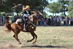 Members of Turkey's only all-female cirit team must compete against men due to the lack of other female athletes who play the equestrian sp. Mounted Archery, Horse Costumes, Horse Gear, Female Athletes, Horses, Bows, Sport, Ideas, Arches