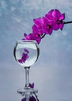 Wine of orchids by Daykiney on DeviantArt