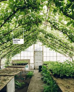 We're just thrilled about our favourite colour being the Pantone pick for greenery couleur de l'année 2017 pantone nuancier vert green color couleur Color Of The Year 2017 Pantone, Pantone Color, Ficus, Horticulture, Pantone Greenery, Home Greenhouse, Small Greenhouse, Greenhouse Ideas, Pot Plante