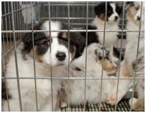 You go into a pet store to buy some delicious treats for your oh-so-adorable companion animal, only to find out that the store is  selling live animals and keeping them in appalling conditions. Learn what you can do.