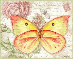 Jane Shasky / Butterflies / February 2016