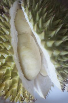 Durian from Bulusan  Sorsogon, Philippines