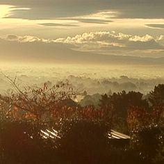 Afternoon mist Havelock North home