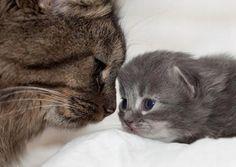 cute. i wish my kitty was still small.