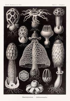 https://www.theguardian.com/books/gallery/2017/nov/01/ernst-haeckel-the-art-of-evolution-in-pictures