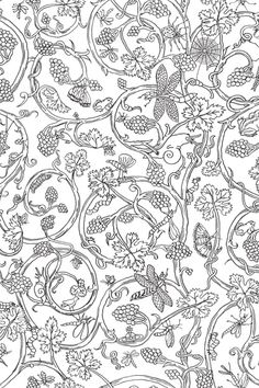 Cole & Son Insects - Wallpaper Ideas & Designs - Living Room & Bedroom (houseandgarden.co.uk)