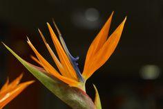 A different flower by David Gonzalez on David Gonzalez, Different Flowers, Watercolor, Plants, Flowers, Pen And Wash, Watercolor Painting, Watercolour, Plant