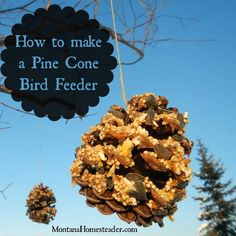 How to make an all natural Pine Cone Bird Feeder, a great project to do with kids on a cold, snowy winter day! | Montana Homesteader