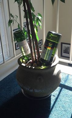 #Upcycle your empty wine bottles by using them as plant nannies!