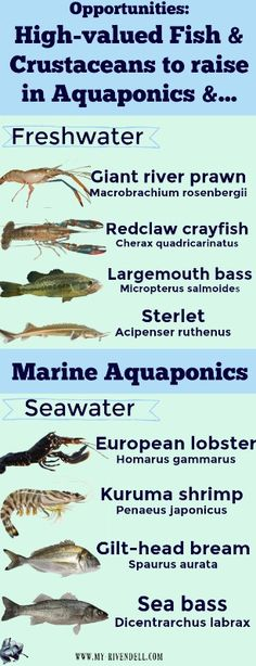 to choose which crustacean or fish species you're going to rear.In this lesson we outline the features of the main reared fish species in Aquaponics and other opportunities of breeding. Aquaponics Greenhouse, Aquaponics Fish, Fish Farming, Aquaponics System, Hydroponic Gardening, Organic Gardening, Greenhouse Ideas, Shrimp Farming, Indoor Aquaponics