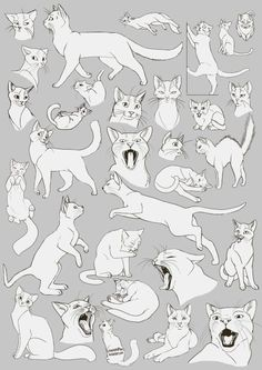 Anatomy Drawing Reference Cat Anatomy Drawing Cats Images Animal Drawings Drawing Ideas on How To Draw Animals Cats and Their Anatomy Over Millions