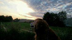 Morgenstund hat Gold im Mund, sagt sich auch mein Gandhi-Hund.