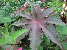 Foliage Follow Up – September 2013 | The Patient Gardener's Weblog