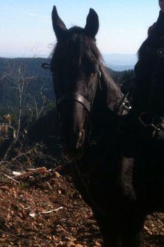 My new friend Friday! New Friends, Friday, Horses, Animals, Animales, Animaux, Animal, Animais, Horse