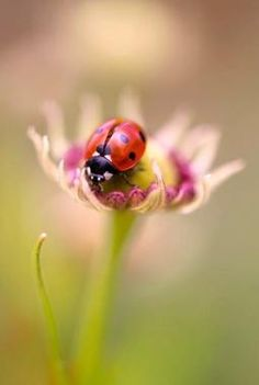 Lady bug, lady bug fly away home Photo Coccinelle, Bokeh Photography, Tier Fotos, Belleza Natural, Pics Art, Beautiful World, Beautiful Bugs, Beautiful Creatures, Mother Nature
