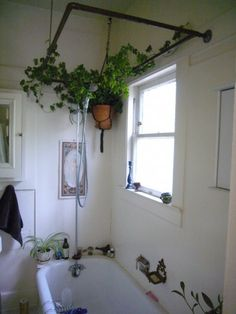 bathroom-plant. THE BASICIS AND SUGGESTED