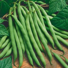"""Green bean: Provider 