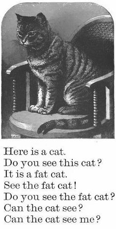 Do you see the fat cat?