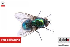 Free photo of green fly for download on www.dipixio.com #freephoto #freebie #dipixio #freedownload