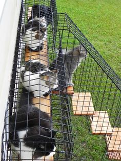 Photo Gallery - Habitat Haven Diy Cat Enclosure, Dog Enclosures, Outdoor Cat Enclosure, Reptile Enclosure, Outdoor Cat Tunnel, Outdoor Cats, Cage Chat, Feral Cat House, Cat Habitat