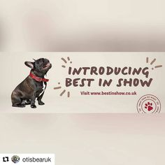 Modelling skills on point!! @otisbearuk @aimz_b  Everyone should take a look at @bestinshowuk  they sell some amazing luxury products for us pooches! Plus.. Check out my modelling skills!  #bestinshow #petsofinstagram #dogsofinstagram #frenchiepup #squishyfacecrew #frenchie_love #frenchbulldogsofinstagram #frenchiesofinstagram #otisthefrenchie #ears #frenchiesofig #frenchbulldoglove #pooch #modeling #petmodel #cute #woof #instapets #instafrenchie #brindlefrenchie #bulldog