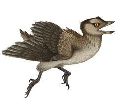 Gobipteryx minuta | A Dinosaur A Day