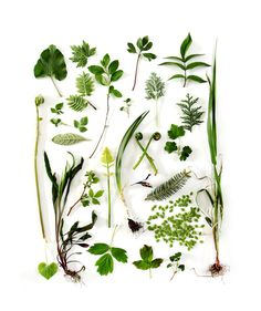 Go on a spring greens scavenger hunt.  How many can you find?  Contrast and compare (sizes, colors, shape, etc)