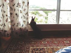 Bunny looks at what a big world it is out there - December 19, 2012