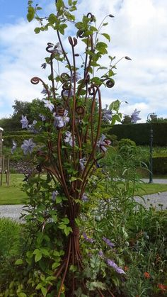 Clematis support