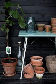 Vihreä talo & Tikkurila Suomi Eatable Flowers, Outdoor Flowers, Terracotta Pots, Tropical Plants, Fun Drinks, Black House, Indoor Plants, Restoration, Planter Pots