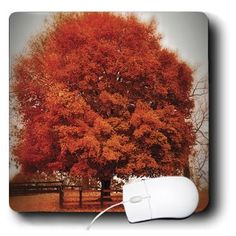 mp_48682_1 Angel Wings Designs Scenic - Fall Landscape - Falling Down - Fall Trees in Georgia with colors that pop - Mouse Pads 3dRose http://www.amazon.com/dp/B008168868/ref=cm_sw_r_pi_dp_8iNqub15K83W0