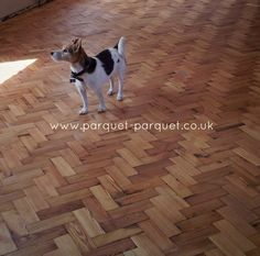 Pitch Pine floor as laid by another lovely customer and fully approved by his Jack Russel!