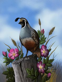 A male California Quail rests on a fencepost surrounded by wild roses. Quail and Wild Roses Wildlife Paintings, Wildlife Art, Southwestern Art, Desert Art, Bird Artwork, Bird Drawings, Bird Pictures, Gourd Art, Wild Birds