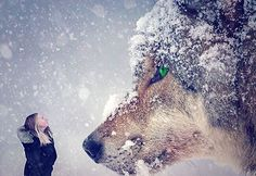 All species capable of grasping this fact manage better in the struggle for existence than those in which rely on their own strength alone: the wolf which hunts in a pack has a greater chance of survival than the lion which hunts alone.   #nature#canada#korea#wolves#composite#portrait#travel#snow#travelphotography#winter#asia#pexels#pixaby#winter#taebaeksan#montreal#canada#toronto#environment#자연#사진술#gooutside#playoutside#웃스타그램 #팔로우미 #인친 #새벽 #서울  #데일리#ladieswhotravel @m.p.c…