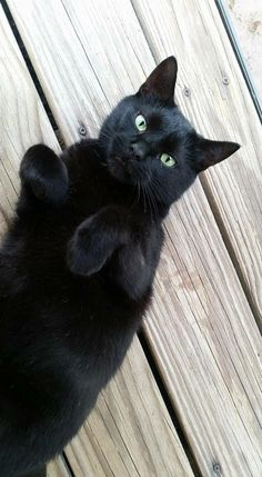 Fred McGee's beautiful black cat, Fred.