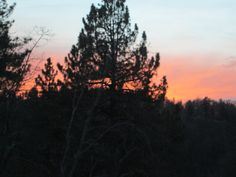 A pine tree silhouette at sunset up in the San Bernardino Mountains.