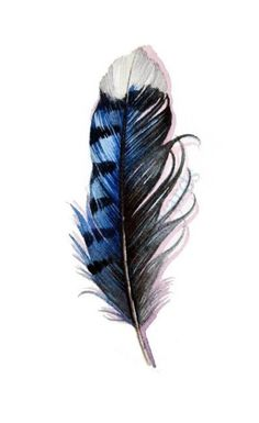 Further research for my blue jay feather tattoo, to go on the back of my left bicep. Feather Drawing, Watercolor Feather, Feather Painting, Watercolor Tattoo, Watercolour, Trendy Tattoos, Small Tattoos, Cool Tattoos, Tatoos